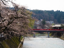 Red bridge and Cherry Blossom in old town Stock Image
