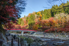 Red bridge and colorful autumn leaf Royalty Free Stock Photos