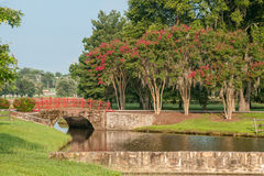 Red Bridge and Crepe Myrtles Stock Image