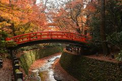 Red bridge in a Japanese garden with red maples, Fall seas Royalty Free Stock Images