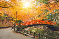 Red bridge in maple forest colorful autumn in Japan Royalty Free Stock Image