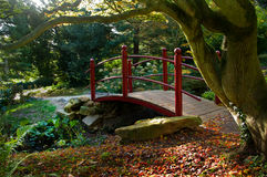 Red bridge. By overhanging tree Stock Photo