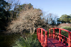 Red Bridge. Tucked away behind a brick building lies  7 acres of gardens that make up the New Hanover County Arboretum. The little red bridge leads to a small Stock Image