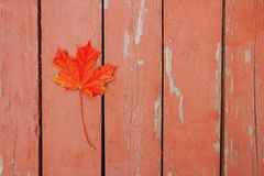Red bright autumn maple leaf on wood surface.  stock image
