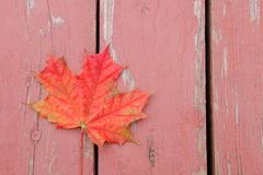Red bright autumn maple leaf on wood surface.  royalty free stock photos