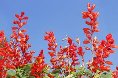Red bright flowers Stock Photo