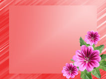 Red bright frame with flowers hollyhock Stock Image