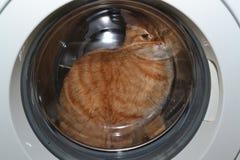 Red,British cat. Red,British cat in the washing machine Stock Photos