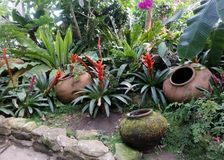 Red Bromeliads and cold clear water in garden clay jar Stock Photos