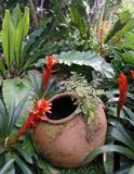 Red Bromeliads and cold clear water in garden clay jar Royalty Free Stock Photo