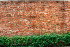 Red brown brick wall with green leaves