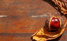 Red-brown chestnut on wooden background, table, with copy space for your text, flat lay, top view Stock Photo