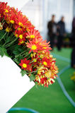 Red brown Chrysanthemum Royalty Free Stock Images