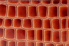 Red brown color of crocodile skin. Stock Images