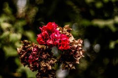 Red and Brown Flowers stock images