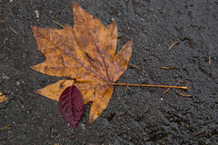 Red and brown leaves on the sidewalk Stock Photos