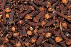 Red brown seed clove(loong india) Syzygium aromaticum Royalty Free Stock Images