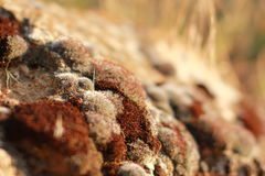 Red and Brown Stone Fragments Royalty Free Stock Photos