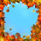 Red brown and yellow maple leaves, autumnal frame, golden autumn Stock Image