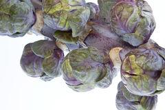Red Brussels Sprouts Royalty Free Stock Image
