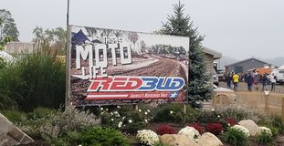 Red bud stock image