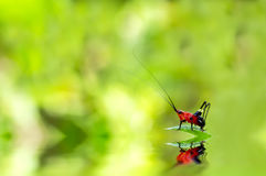 Red bug on a green leaf Stock Photos