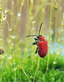 Red bug Stock Photos