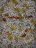 Red bugs soldiers Royalty Free Stock Images