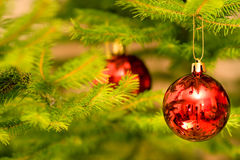 Red bulb. Red bulb on christmas tree Royalty Free Stock Images