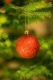 Red bulb. Red bulb on christmas tree Stock Photos