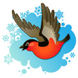 Red bullfinch on winter background. Red bullfinch on winter blue background Stock Photography