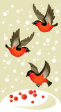 Red bullfinches on winter background. Three red bullfinches on winter background Royalty Free Stock Photos