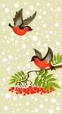 Red bullfinches on winter background. Two red bullfinches on winter background Royalty Free Stock Image