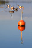 Red buoy in sea Stock Photography