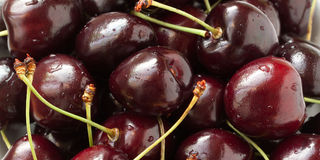 Red-burgundy cherry. Ripe delicious burgundy cherry, with drops of water Stock Photos