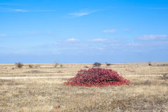 Red bush Stock Photos