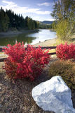 Red bushes by a lake. Stock Image