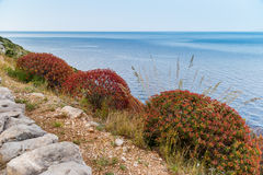 Red bushes by the sea in Sicily Stock Photo