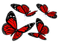 Red butterflies isolated on a white. Background Royalty Free Stock Photography