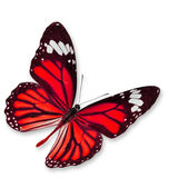 Red butterfly royalty free stock photo
