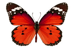 Red butterfly. Beautiful red butterfly isolated on white background Stock Photos