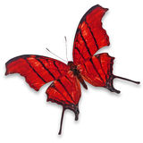 Red butterfly Royalty Free Stock Images