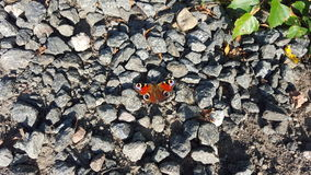 Red butterfly. Beautiful butterfly on stones Royalty Free Stock Photography