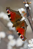 Red butterfly on the branch of tree vertical Stock Image