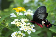Red butterflyRed butterfly swarming on flowers