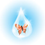 Red Butterfly in a drop of water Stock Images
