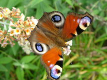 Red butterfly. Butterfly red flower in the summer forest stock photo