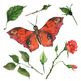 Red butterfly and flowers Royalty Free Stock Images