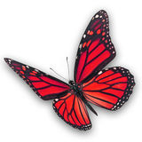 Red Butterfly Flying Stock Images