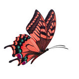 Red butterfly flying Royalty Free Stock Image
